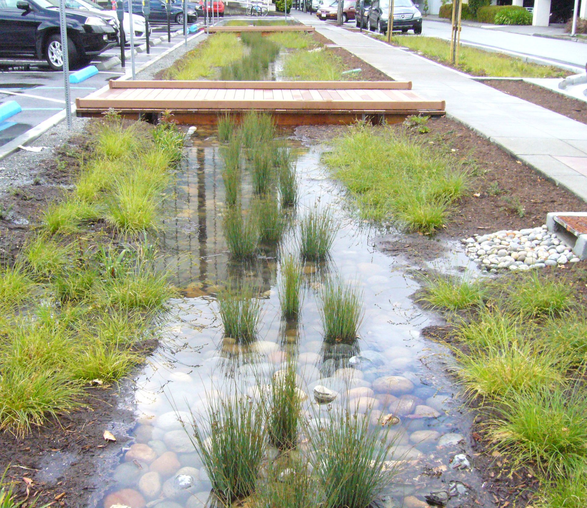 Landscape features like rocks, plants, and wood chips help absorb runoff between concrete