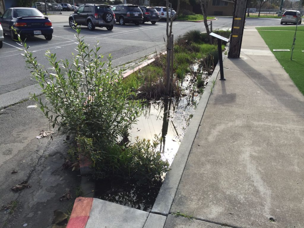 plants in between sidewalk and concrete to absorb water runoff